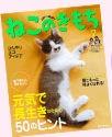 catconcept_img3.jpg